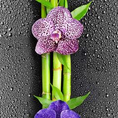 Панель ПВХ ДекоПласт коллекция Фьюжн Орхидея 1
