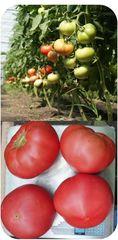 Пинк Мэджик F1 семена томата индетерминантного (Sakata / Саката)