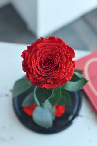 Роза King Выс*Диам*Бутон (30*18*12см) Цвет красная
