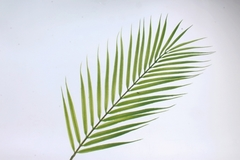 Ветка Пальмы 60 см PUK1014