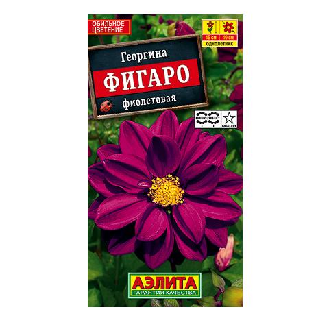 Георгина Фигаро махровая фиолетовая (Аэлита)