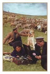 Açıqca \ Открытки \ Postcard Azərbaycanda yaylaq
