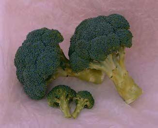 Брокколи Хронос F1 семена капусты брокколи (Sakata / Саката) ХРОНОС_F1_семена_овощей_оптом.jpg