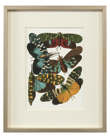 Insect Assemblage I