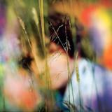 Sam Amidon / Sam Amidon (CD)