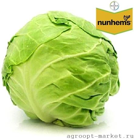 Nunhems Свирель F1 семена капусты белокочанной (Nunhems / Нюнемс) свирель.jpg