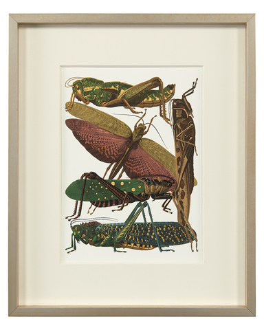 Insect Assemblage III