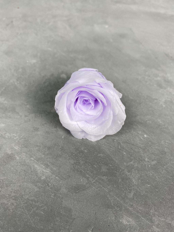 Роза классическая бело-фиолетовая d=3-3,5 см