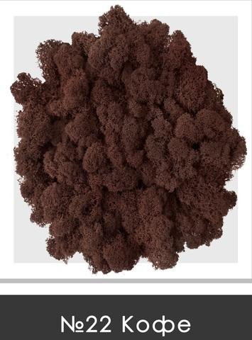 Стабилизированный мох (ягель) цвет №22 Кофе