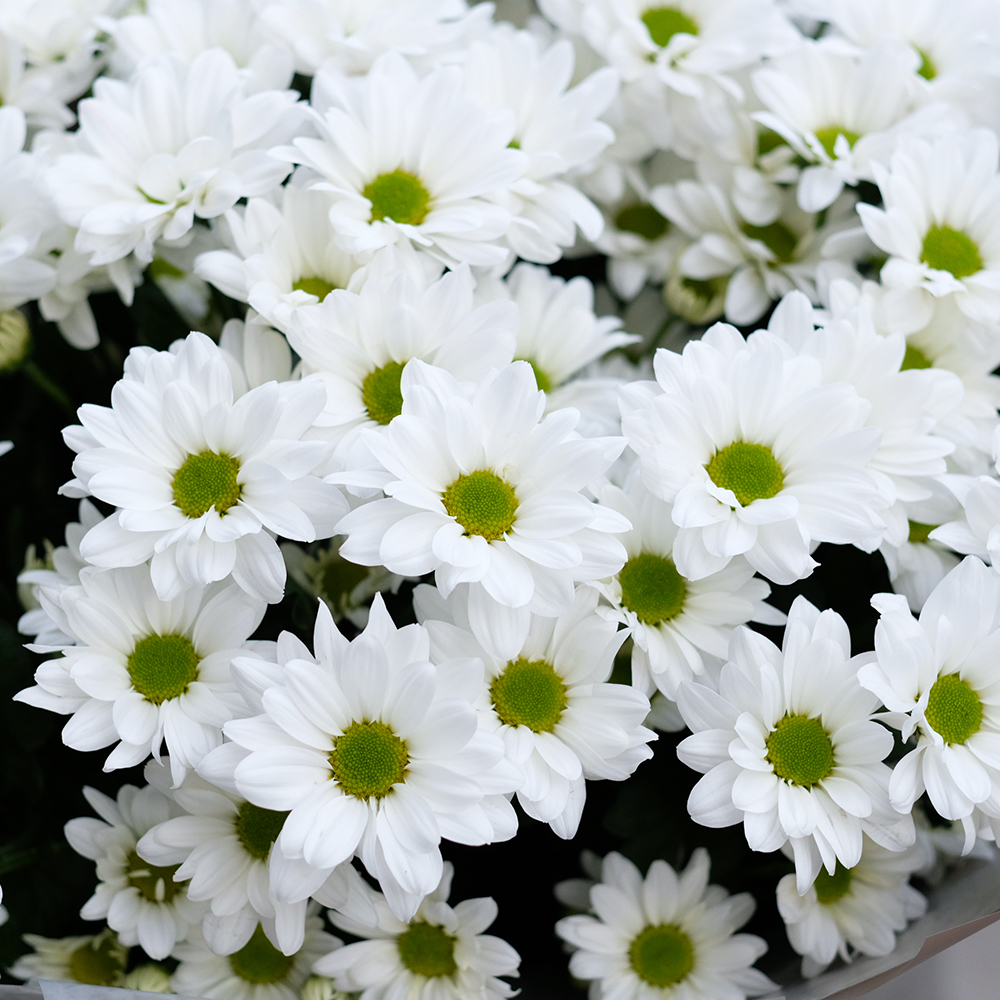 Букет с белыми хризантемами