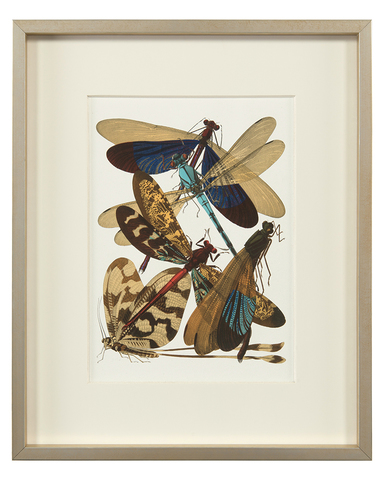 Insect Assemblage IV