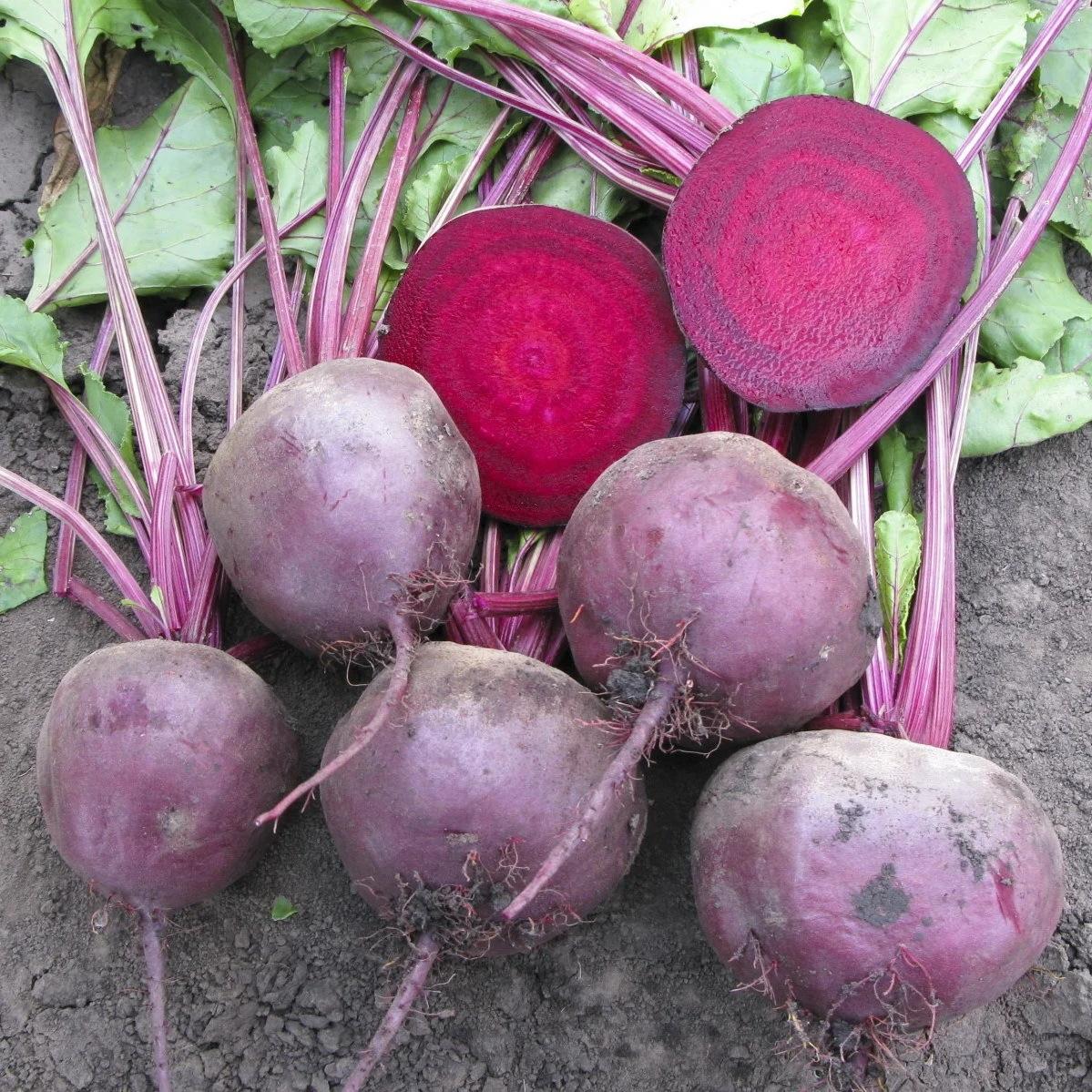 Rijk Zwaan Бебибит семена свеклы (Rijk Zwaan / Райк Цваан) бебибит.jpg
