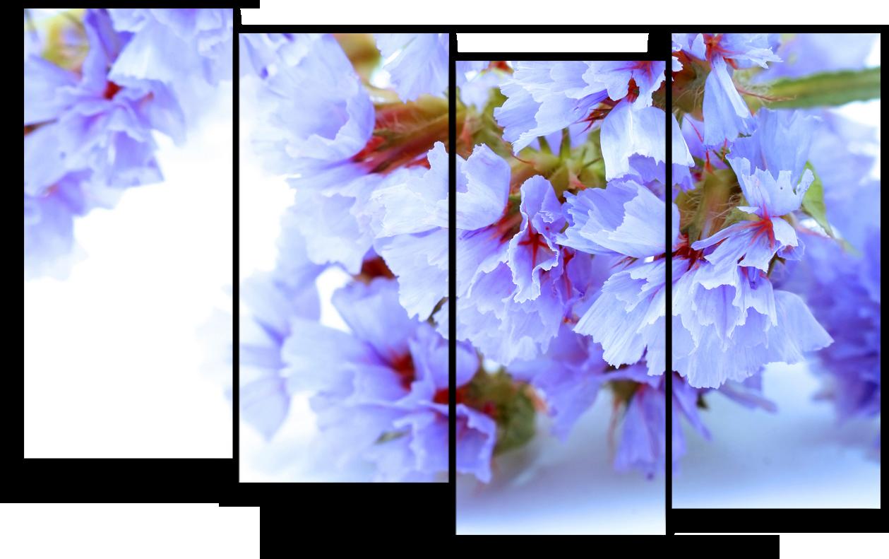 """Цветы Модульная картина """"Белая лазурь"""" М919.png"""
