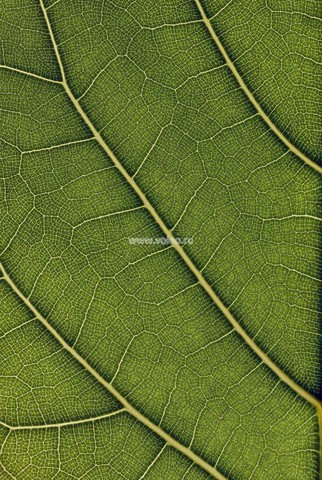 Фотообои (панно) Mr. Perswall Urban Nature P031501-4, интернет магазин Волео
