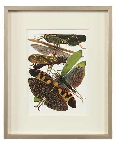 Insect Assemblage V
