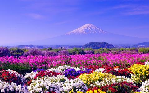 Алмазная Мозаика 40x50 Гора виднеется из-за поля цветов (арт. 2PAV738)