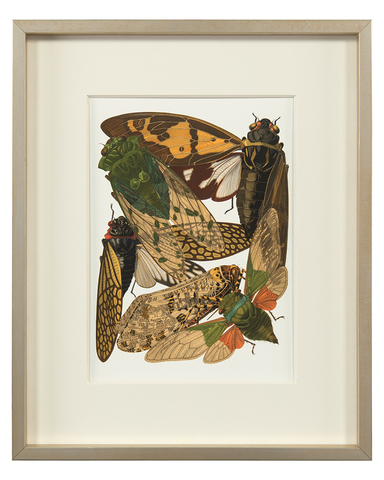 Insect Assemblage VI