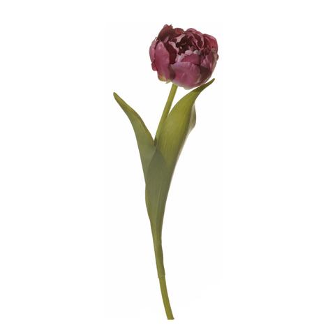 Тюльпан фиолетовый