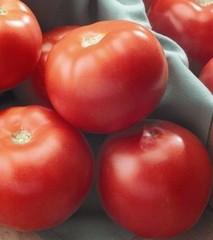 Флорида F1 семена томата детерминантного (Seminis / Семинис)