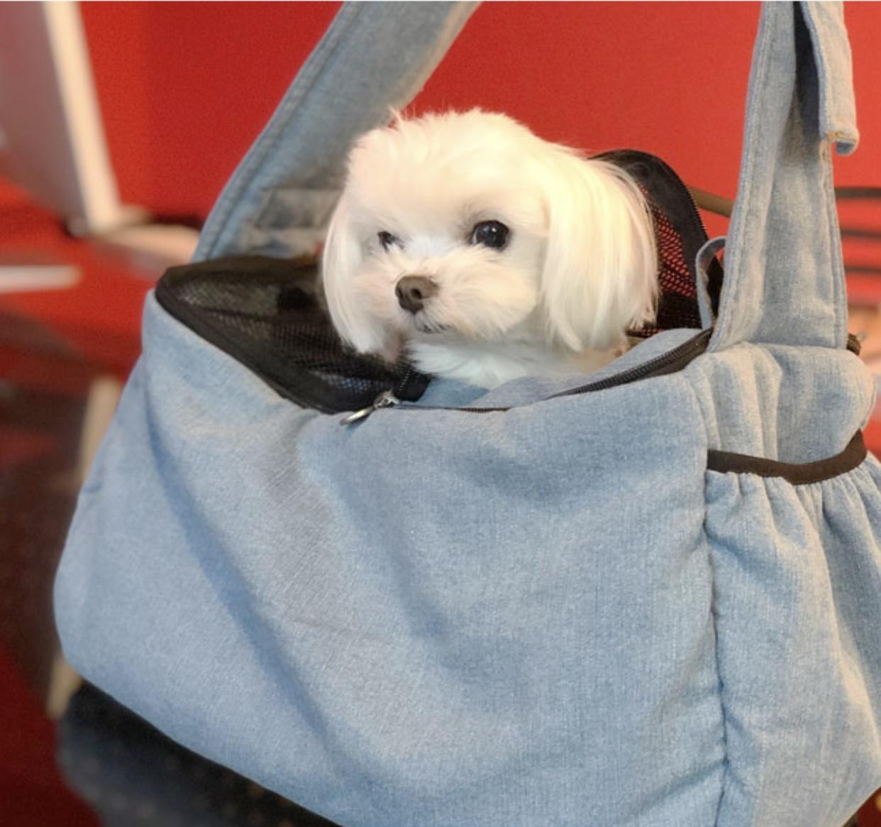 сумка слинг для собак