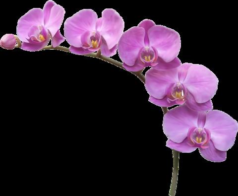 Грунт (субстрат) для орхидей 1 л.