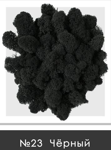 Стабилизированный мох (ягель) цвет №23 Черный