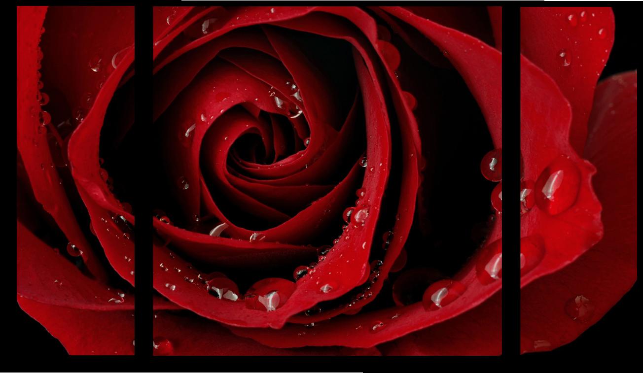 """Цветы Модульная картина """"Роза"""" М404.png"""