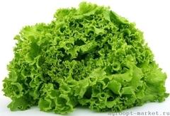 Сканстар семена салата листового (Nunhems / Нюнемс)