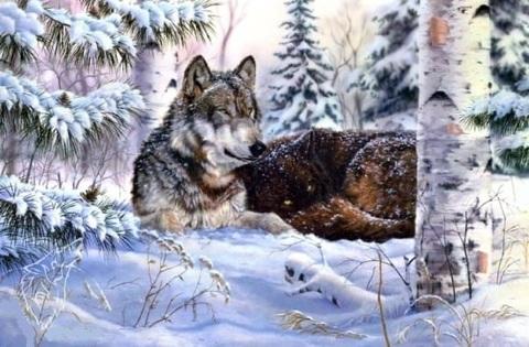 Алмазная Мозаика 40x50 Волк охраняет спящую волчицу (арт. SGA2293 )