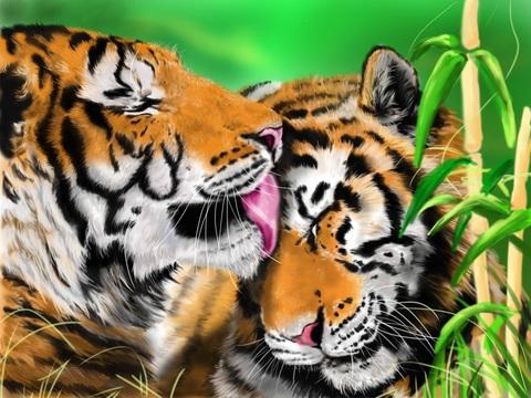 Алмазная Мозаика 40x50 Поцелуй тигра (арт. HWSA5125)