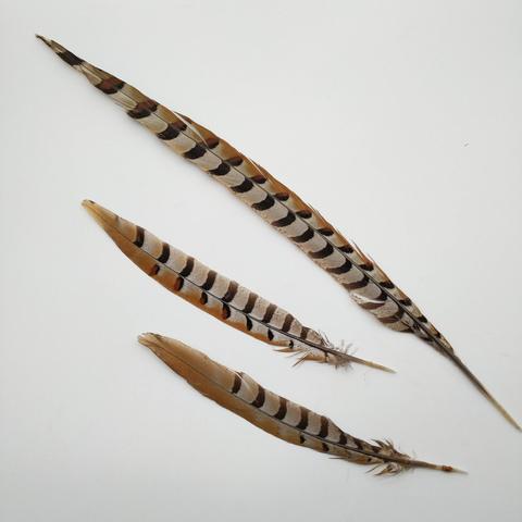 Перо фазана ,  длина ок. 25-60 см. (выбрать цвет)
