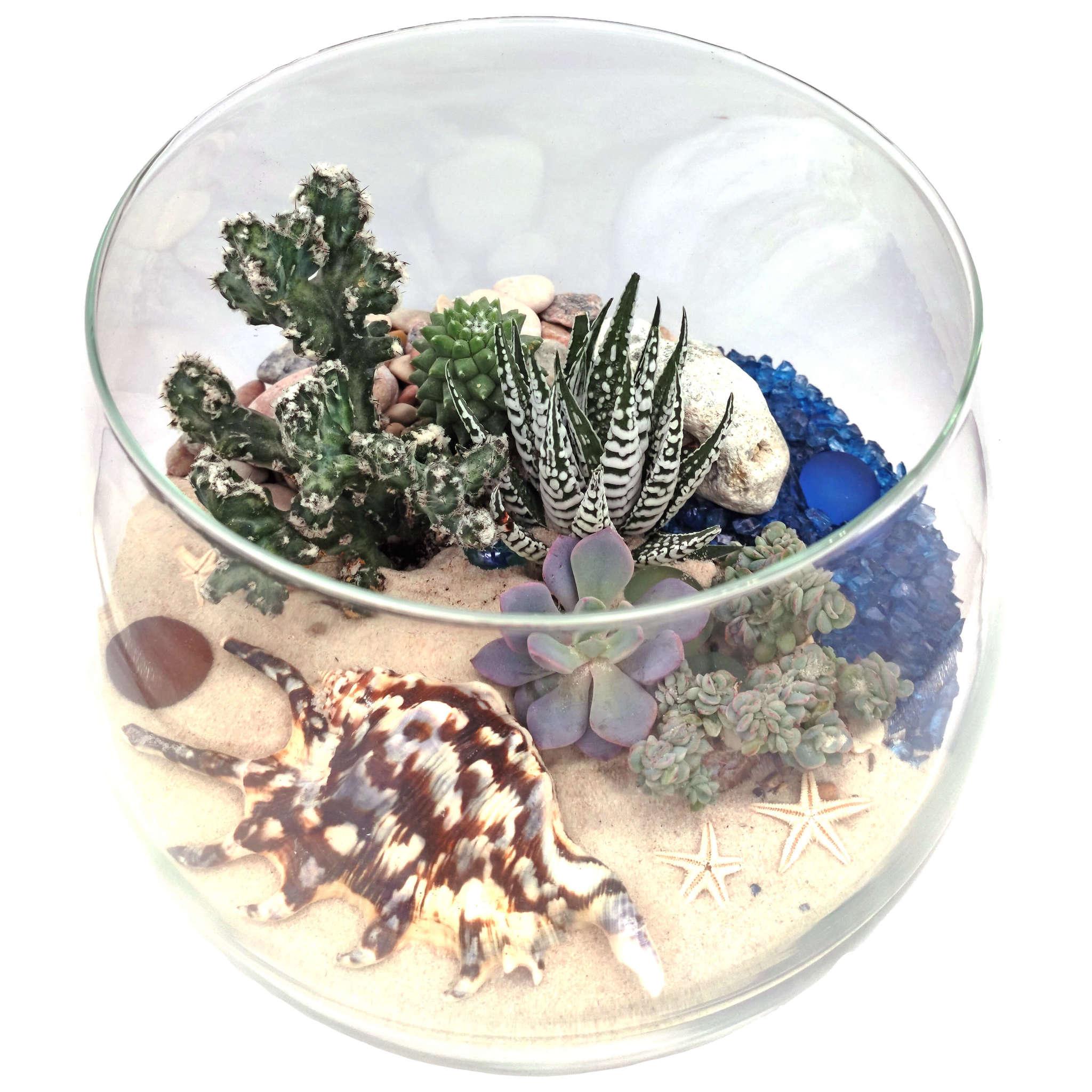 Океан - живая композиция из суккулентов в стекле (фото 2)