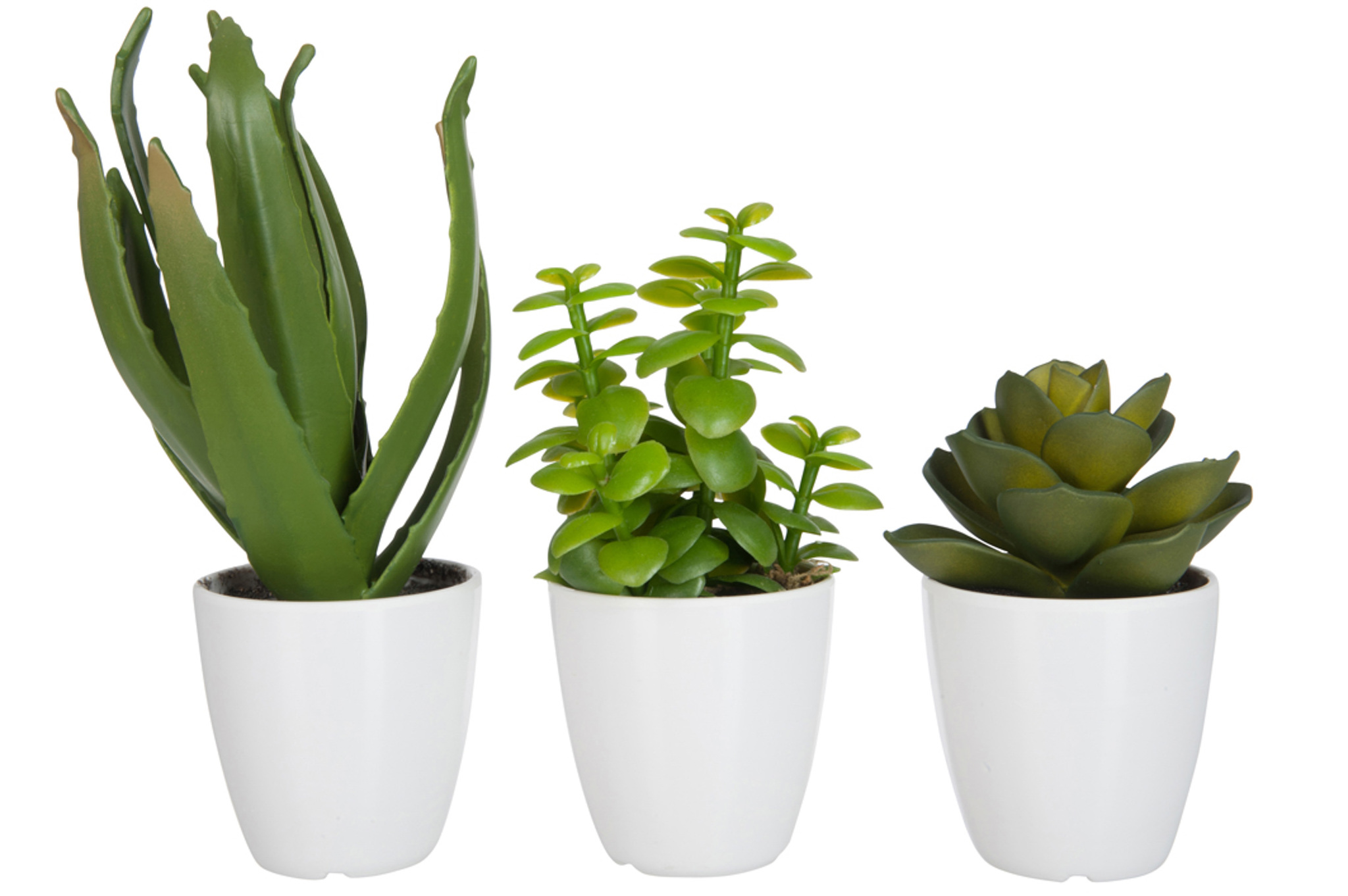 Растение в кашпо в ассортименте малое