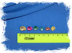 цветные ракушки с завитком размер