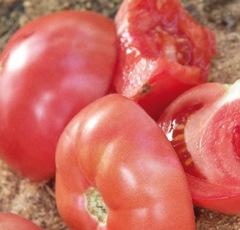 Розализа F1 семена томата детерминантного (Seminis / Семинис)