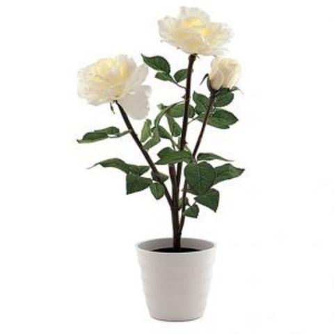 Светильник  СТАРТ   LED роза3 белый
