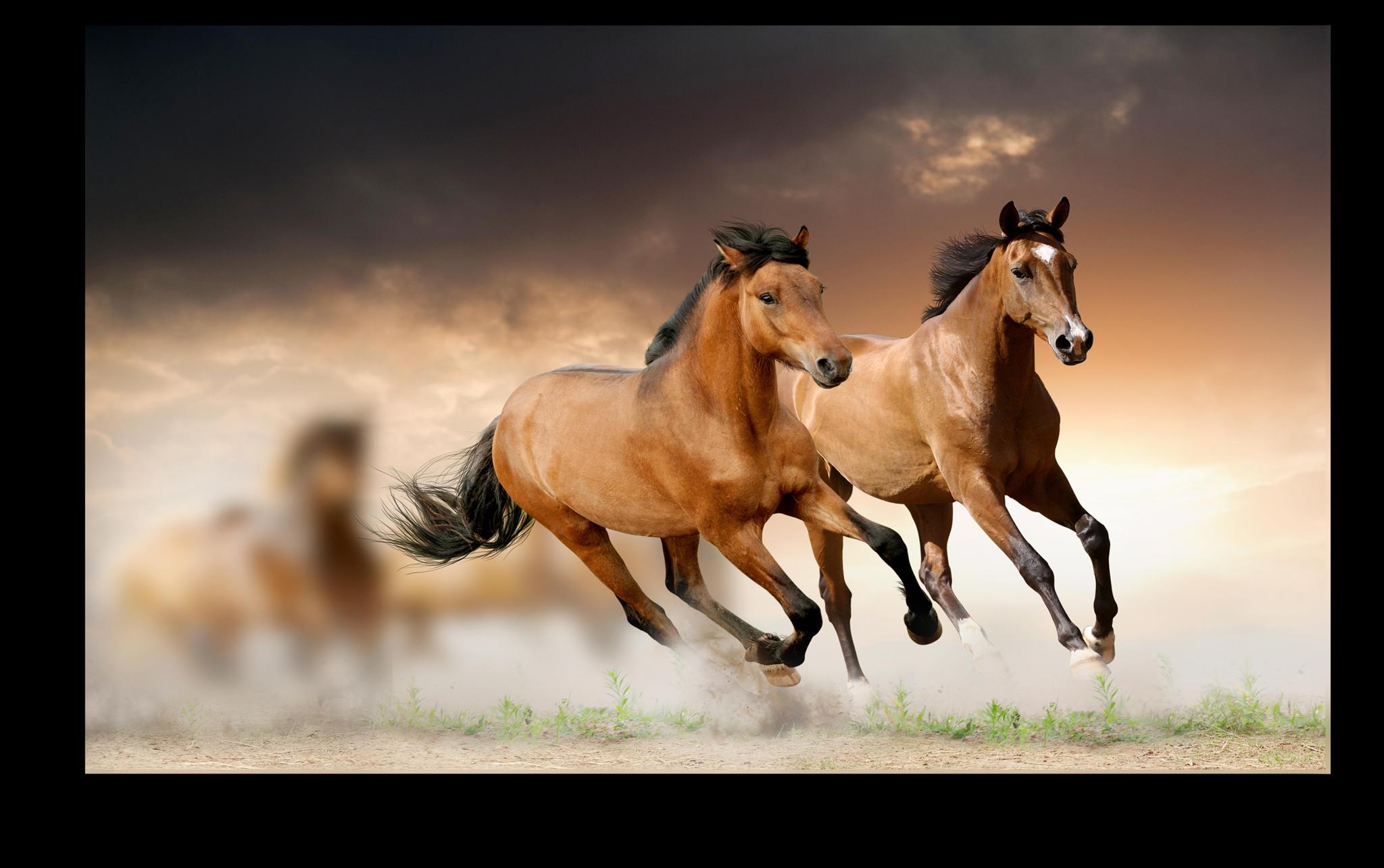 """Постеры Постер """"Бегущие лошади"""" п239.png"""
