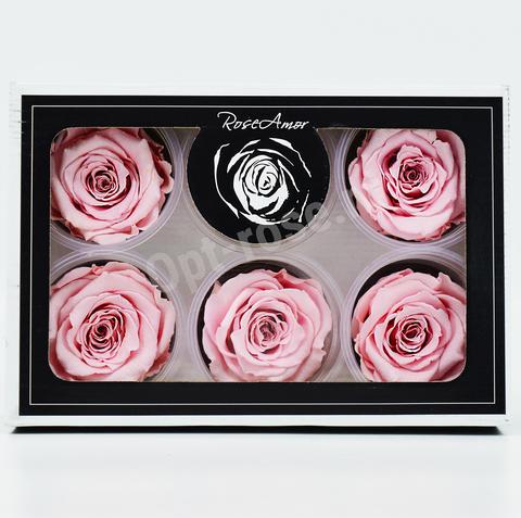 Стабилизированный Бутон Розы Rose Amour XL. Цвет Нежно-Розовый. (Диаметр 6-7см)