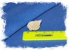 Nassarius labordei размер