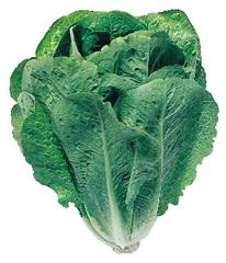 Лираз семена салата айсберг (Hazera / Хазера)