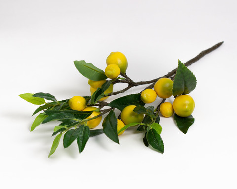 Ветка лимона.