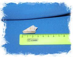 Conus voluminalis размер