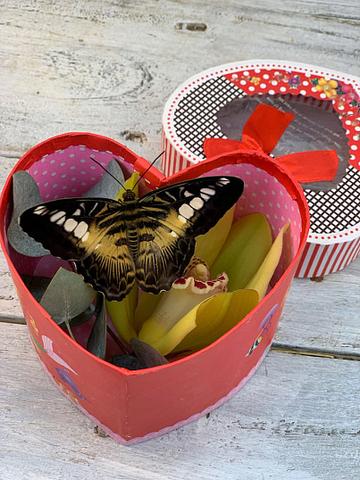 Цветы и живая бабочка в шляпной коробке #21998