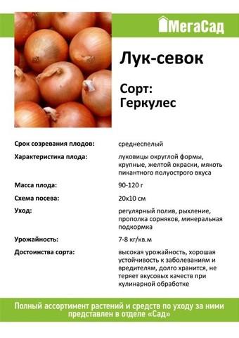 Лук севок сорт Геркулес 450гр
