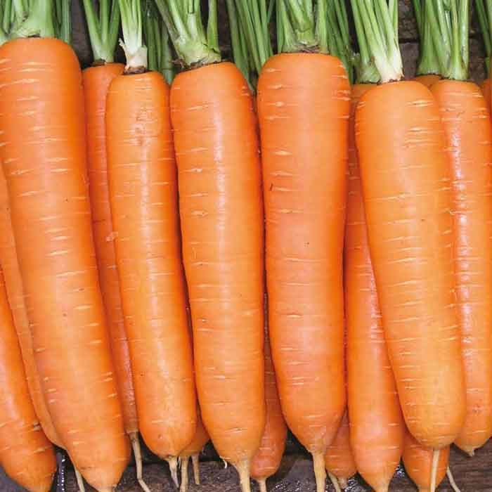 Nunhems Элеганс F1 семена моркови нантской (Nunhems / Нюнемс) элеганс_.jpg