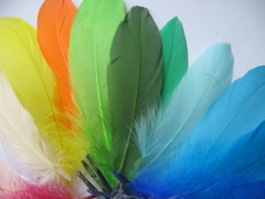 Перья гуся 20-25 см.(1 шт.) (выбрать цвет)