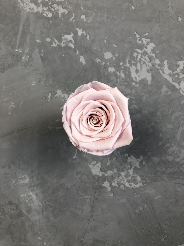 Роза классическая нежно-розовая d=5,5 см