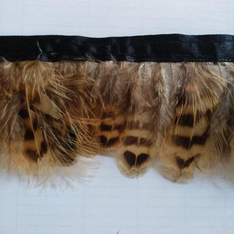 Тесьма  из перьев  самки фазана  около 5- 6 см. Вид 2
