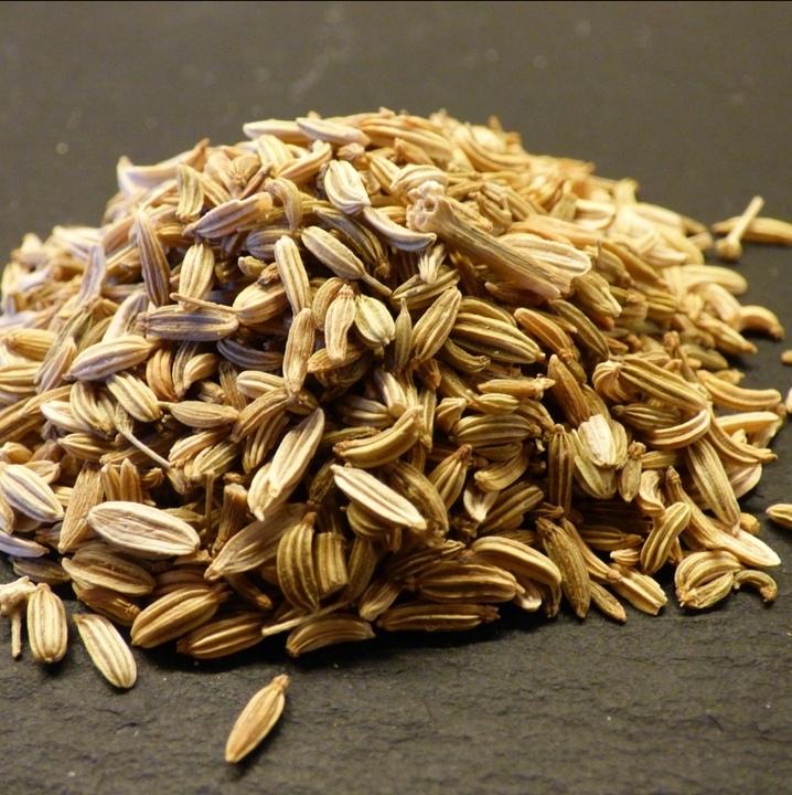 Семена Фенхель, плоды foeniculum-03.jpg