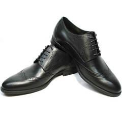Черные мужские туфли дерби броги Ikos 1157-1 Classic Black.